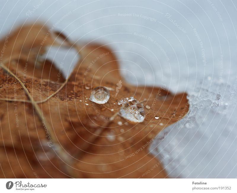 Aggregatzustand fest oder flüssig? Umwelt Natur Pflanze Urelemente Erde Luft Wasser Wassertropfen Sonnenlicht Winter Klima Schönes Wetter Eis Frost Schnee Baum