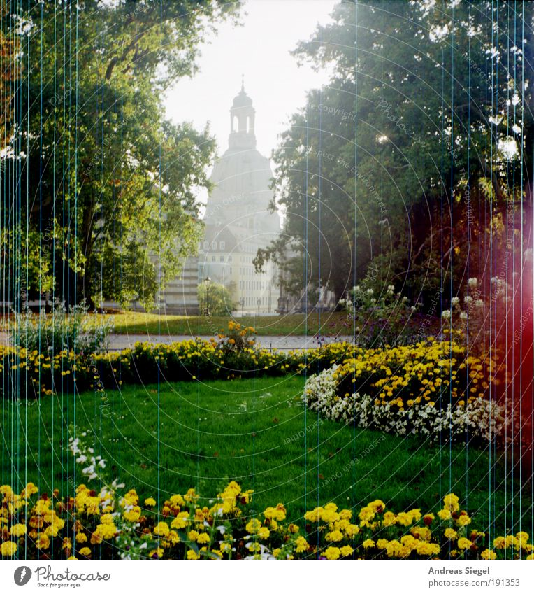 13./14. Februar - 65 Jahre später Umwelt Natur Landschaft Blume Gras Garten Park Dresden Stadt Stadtzentrum Altstadt Sehenswürdigkeit Wahrzeichen Denkmal