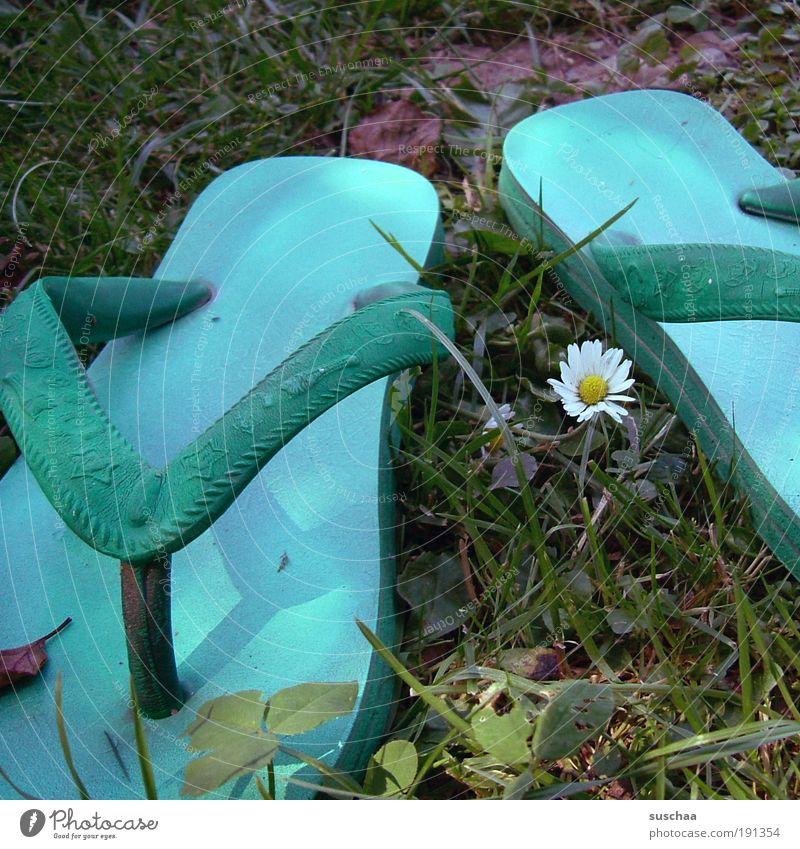 badetag Natur Ferien & Urlaub & Reisen Sommer Wiese Gras See Mode Fröhlichkeit Kunststoff Schönes Wetter Lebensfreude Gänseblümchen Blume Flipflops Schuhe Freude