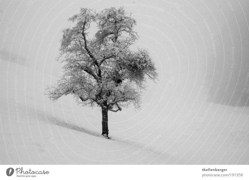 winter never ends Natur Wasser weiß Baum Einsamkeit Winter schwarz Wiese kalt Schnee grau träumen Eis Nebel natürlich Frost