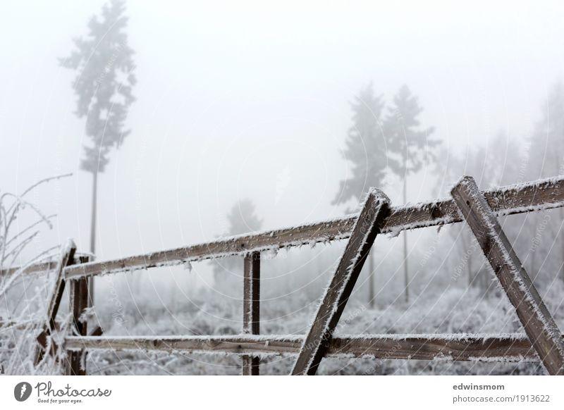 Frostig Winter wandern Natur Nebel Eis Baum Wildpflanze Feld Wald Holz Zaun entdecken frieren gehen Blick fest kalt natürlich wild Farbfoto Außenaufnahme