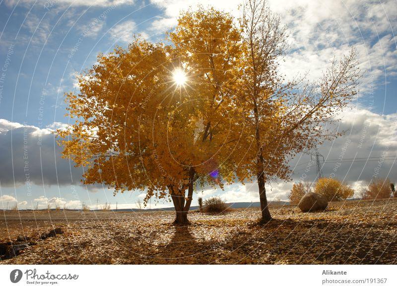nachmittags Natur Himmel Baum Sonne blau ruhig Blatt Wolken Einsamkeit gelb Herbst Gefühle Denken Wärme Landschaft Stimmung
