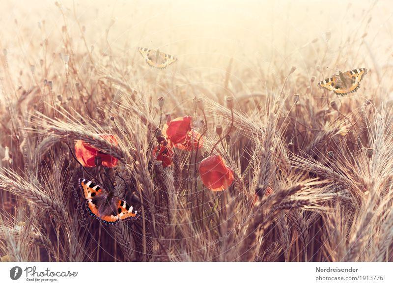 Sommerabend Natur Pflanze schön Sonne Blume Landschaft Erholung Tier ruhig Wärme Leben Glück Feld Wachstum Idylle