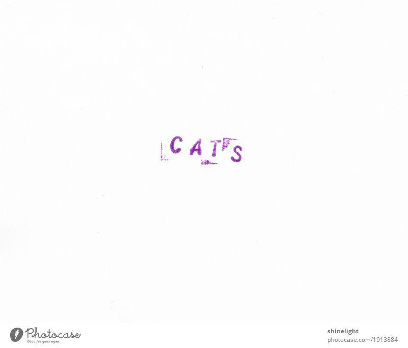 Cats Tier Haustier Katze violett weiß Tierliebe Natur Hauskatze Säugetier Tierschutz Umweltschutz tierisch Farbfoto Textfreiraum links Textfreiraum rechts