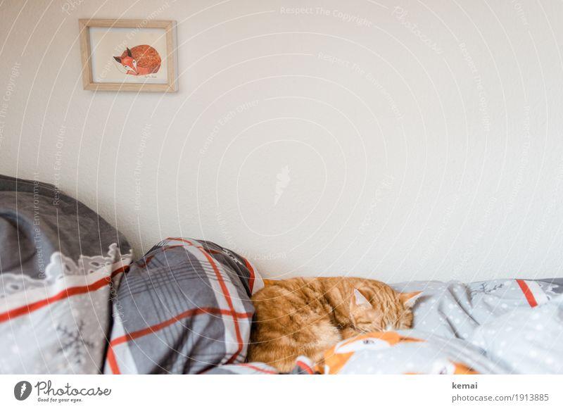Sonntag genießen Lifestyle Stil harmonisch Wohlgefühl Zufriedenheit Erholung ruhig Häusliches Leben Wohnung Dekoration & Verzierung Bett Schlafzimmer Bild