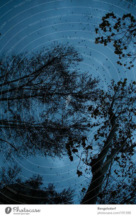 Um Mitternacht bei den drei Eichen Himmel Natur blau Baum Wolken schwarz Wald dunkel Regen Luft Ausflug Stern bedrohlich außergewöhnlich Ast Neugier