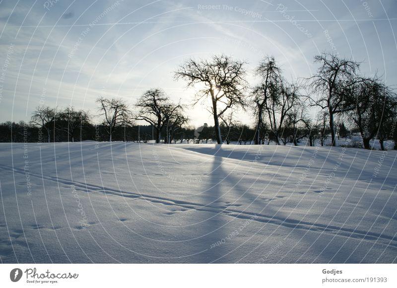 Schneelandschaft 1 Natur weiß Baum Sonne blau Winter schwarz Wolken kalt Landschaft hell Stimmung Umwelt Hoffnung Zukunft positiv