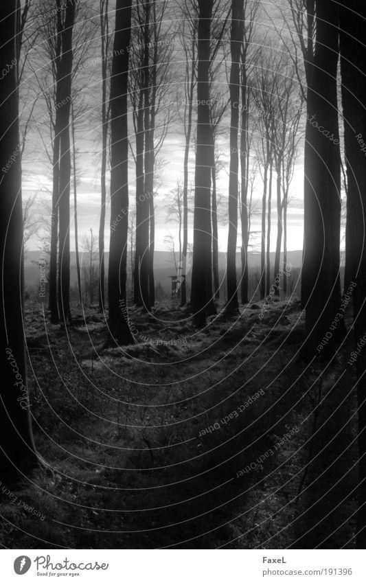 Neulich im Silberwald Natur ruhig Wolken Wald dunkel Herbst Landschaft Wetter Horizont Hügel Gegenlicht Menschenleer Hochsitz