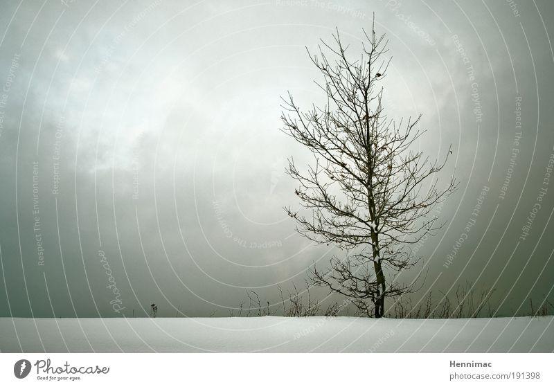 Weniger ist mehr. Natur Landschaft Wolken Horizont Winter Baum frieren Traurigkeit Wachstum kalt braun grau weiß Gefühle Stimmung Trauer Sehnsucht Einsamkeit