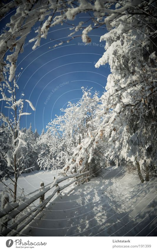 Alice Ferien & Urlaub & Reisen blau weiß Baum Winter Wald Berge u. Gebirge Schnee Freiheit gehen träumen Tourismus Wetter frei wandern Sträucher