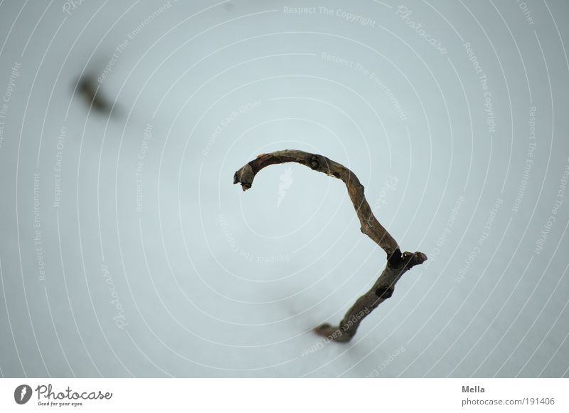 Versunken II Natur Pflanze Winter kalt Schnee Traurigkeit Eis Wetter Umwelt Erde trist Frost liegen Klima Ast Vergänglichkeit