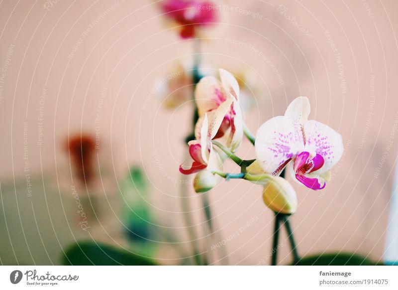 Orchidee Natur Pflanze Blume ästhetisch schön Blüte Orchideenblüte rosa weiß Dekoration & Verzierung fein zerbrechlich Schwache Tiefenschärfe Textfreiraum links