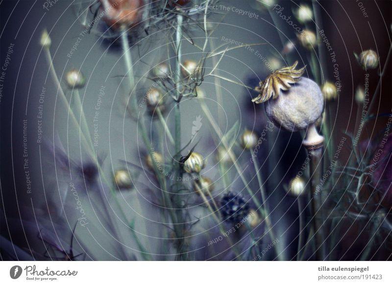 blue mo(h)nday Natur schön blau Pflanze Winter Farbe dunkel kalt grau Blume Umwelt ästhetisch trist Sträucher Kitsch wild