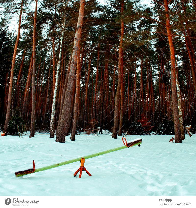 justicia Natur Baum Pflanze Freude Winter Tier Wald Schnee Spielen Garten Park Landschaft Eis Umwelt Lifestyle