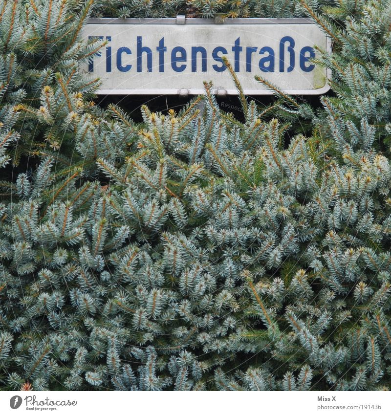 Ach nee, was sonst? Natur Baum Pflanze Sommer Straße Wege & Pfade Garten lustig Schilder & Markierungen Sträucher Dorf Fichte Kleinstadt