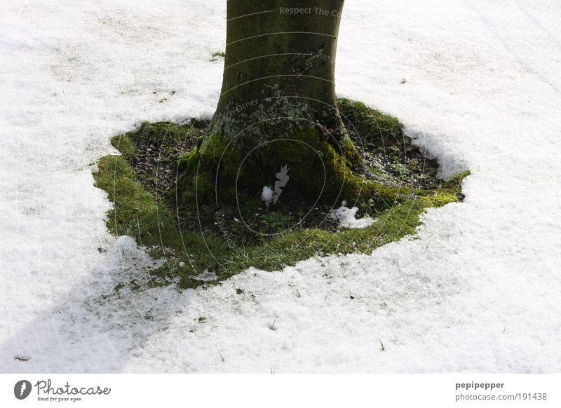 Frühlings-Insel Natur Erde Winter Klima Klimawandel Wetter Schönes Wetter Eis Frost Schnee Park Menschenleer grün weiß Baum Gedeckte Farben Außenaufnahme