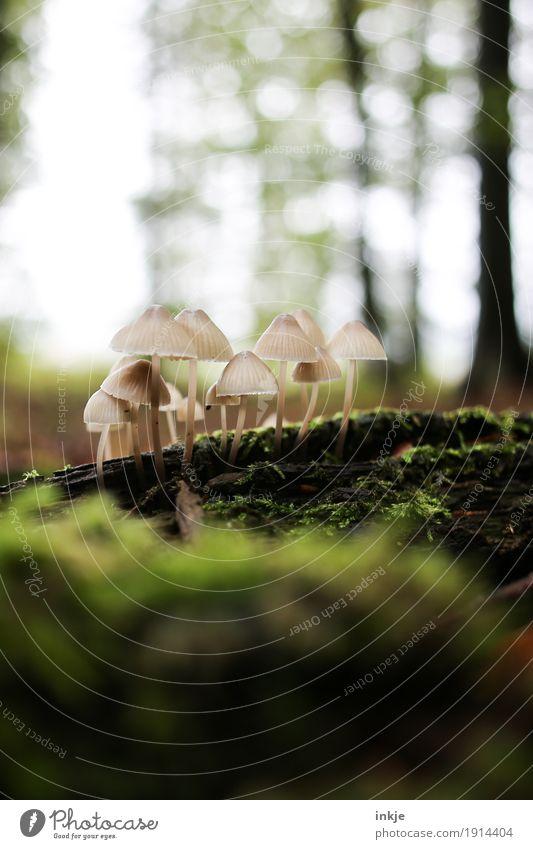 die wilden 13 Natur Pflanze Tier Wald Umwelt Herbst Wachstum mehrere Schönes Wetter Pilz Moos beige Waldboden ungenießbar