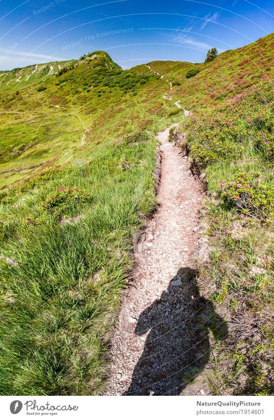 footpath Mensch Himmel Natur Ferien & Urlaub & Reisen Pflanze Sommer Sonne Baum Blume Landschaft Erholung ruhig Ferne Berge u. Gebirge Umwelt Leben