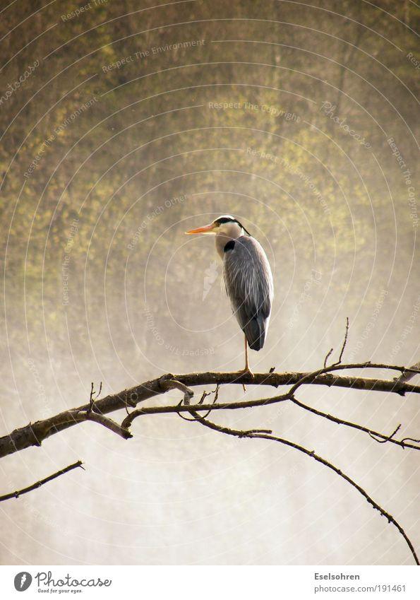 Heron Natur Wasser Tier Vogel Wassertropfen ästhetisch Wildtier Flügel beobachten Wasserfall Rhein