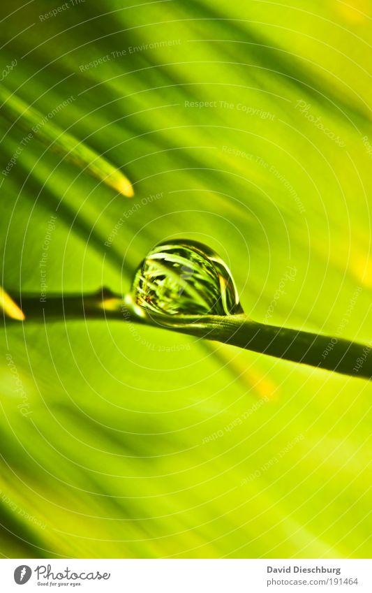 Green Pearl o'clock Leben harmonisch Natur Pflanze Wassertropfen Frühling Sommer Grünpflanze grün silber rund Oberflächenspannung Tau Farbfoto Außenaufnahme