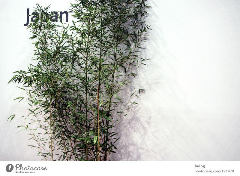 Japan Ferien & Urlaub & Reisen Grünpflanze Bambus Asien Textfreiraum rechts Zimmerpflanze Innenaufnahme