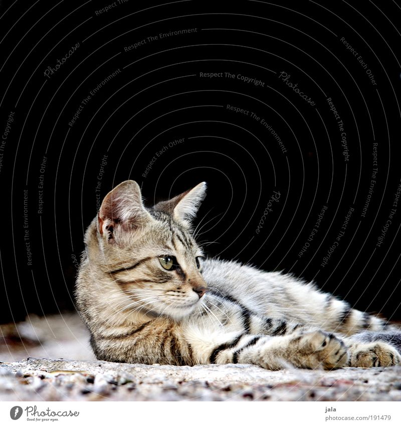 Kleiner Tiger Katze Wärme Tier weich Tiergesicht wild Fell