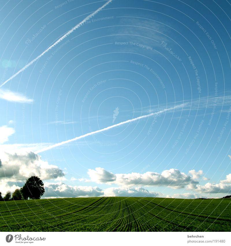 optimismus Natur Himmel Baum Pflanze Sommer Wolken Ferne Herbst Wiese Frühling Freiheit Glück Landschaft Zufriedenheit Kraft Feld