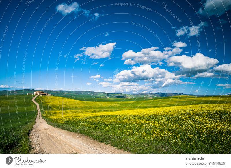schmutzige Straße auf dem Gebiet im Frühjahr Natur Landschaft Himmel Wolken Blume Gras Blüte dreckig blau gelb grün Italien Toskana Feld Frühling Weg