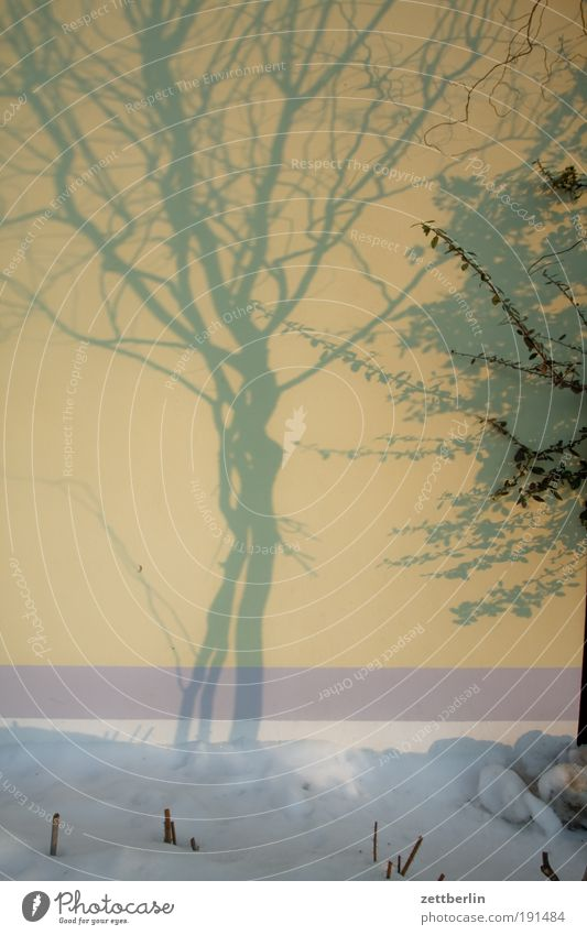 Schatten Baum Winter Haus Schnee Wand