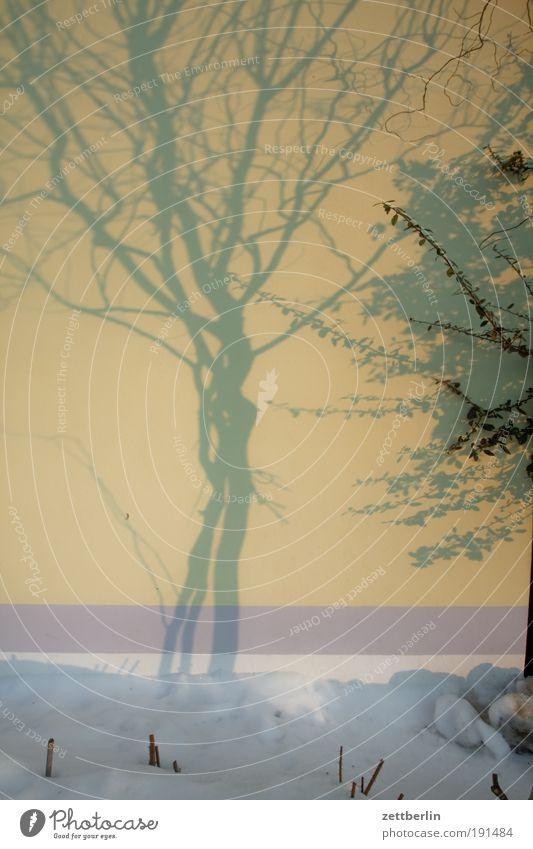 Schatten Schnee Winter Baum Wand Haus