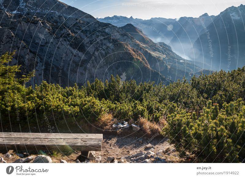 schöne Aussichten Ferien & Urlaub & Reisen Berge u. Gebirge Natur Landschaft Pflanze Himmel Herbst Schönes Wetter Kiefer Nadelbaum Alpen Berchtesgadener Alpen