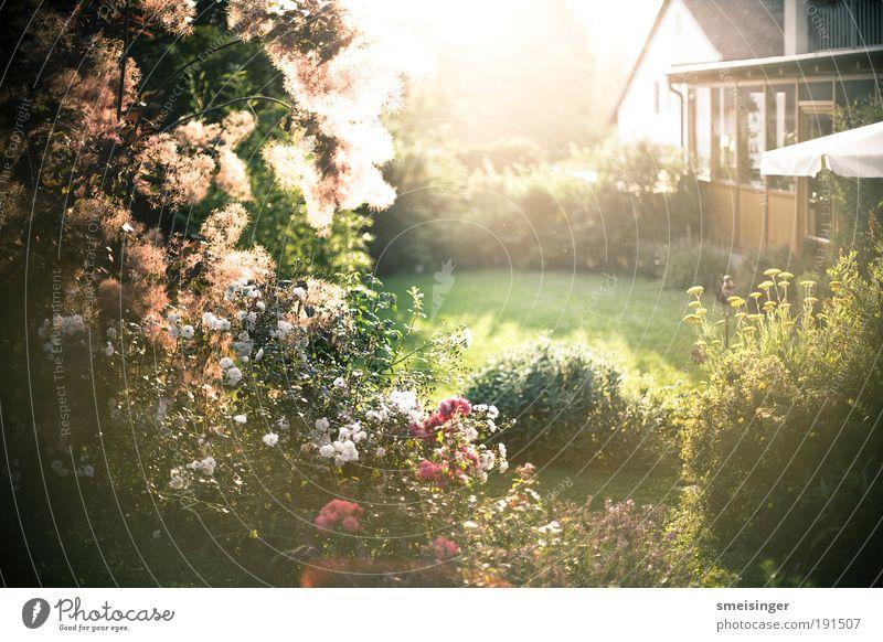 garten Natur Sonne Blume grün Pflanze Sommer Haus gelb Erholung Gras Garten Park Zufriedenheit Umwelt gold Europa