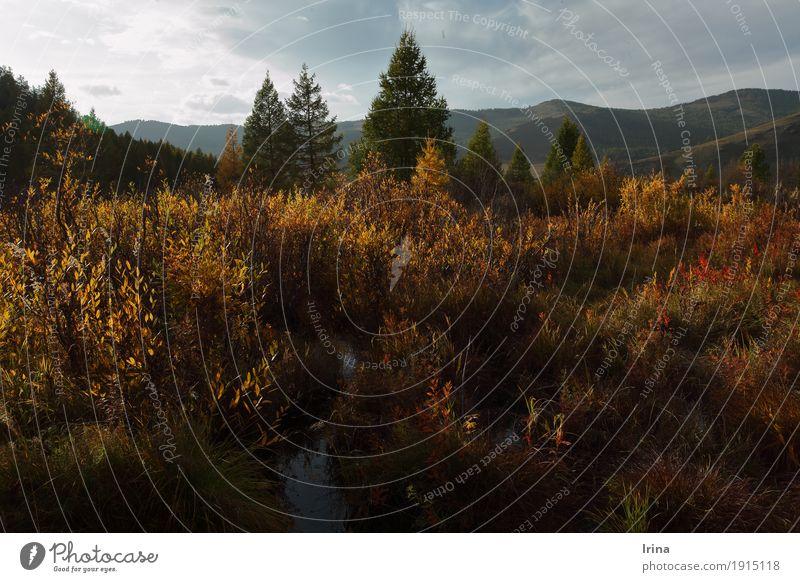 Mongolian Indian summer Natur Ferien & Urlaub & Reisen Baum Landschaft Erholung Einsamkeit ruhig Ferne Herbst natürlich Freiheit Stimmung Zufriedenheit wandern