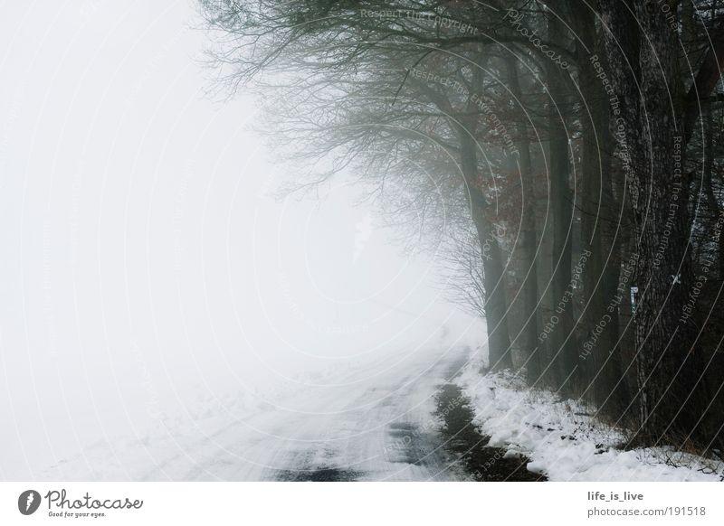 auf dem Weg ins Ungewisse Natur Winter ruhig Einsamkeit Ferne Straße Wald kalt Schnee Freiheit träumen Traurigkeit Stimmung Nebel trist Unendlichkeit