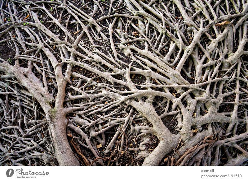 Wurzeln am Boden Natur Baum Wald Holz Wachstum Licht Pflanze Baumwurzel