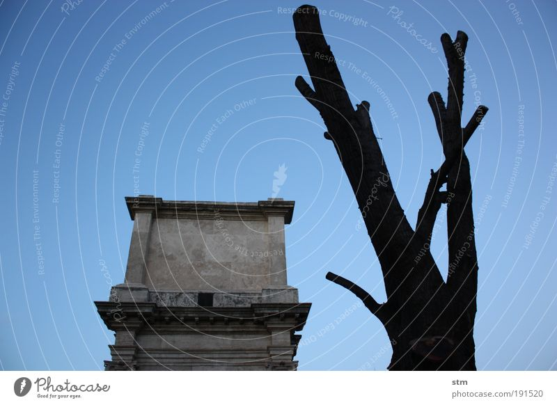 quanto sei bella roma ... alt Baum blau Winter dunkel kalt Tod träumen Stimmung warten Architektur Trauer ästhetisch bedrohlich Kultur