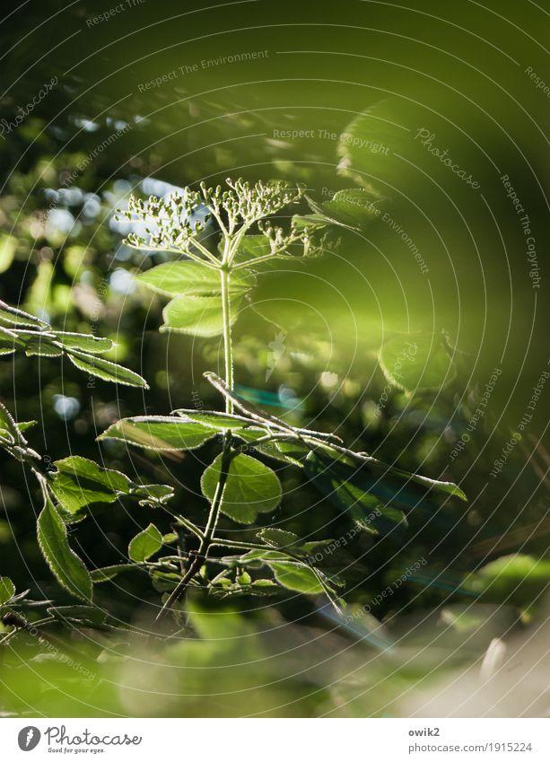It's may they say Umwelt Natur Landschaft Pflanze Frühling Klima Schönes Wetter Blatt Blüte Grünpflanze Wildpflanze Zweig atmen Blühend leuchten Wachstum dünn