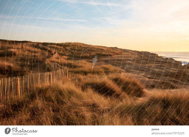 Die Macht der Gegenwart 1 Mensch Landschaft Himmel Horizont Park Wiese Hügel Küste Meer gehen laufen schön blau braun gelb grün Vorsicht ruhig Fernweh
