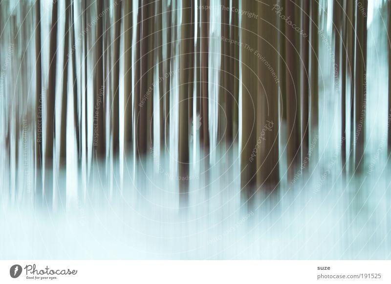 Tagtraum Natur Pflanze Baum Winter Landschaft Wald Umwelt kalt Schnee Gefühle träumen Stimmung außergewöhnlich Nebel Urelemente geheimnisvoll