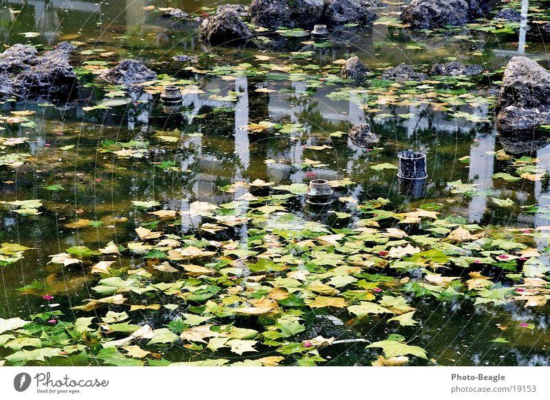 abgestellter Springbrunnen-1 Brackwasser Algen Blatt Stadt Freizeit & Hobby parken Wasser Kommune Insolvenz Arme water fountain