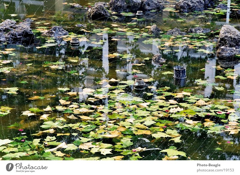 abgestellter Springbrunnen-1 Wasser Stadt Blatt Arme Freizeit & Hobby parken Insolvenz Algen Brunnen Kommune Brackwasser