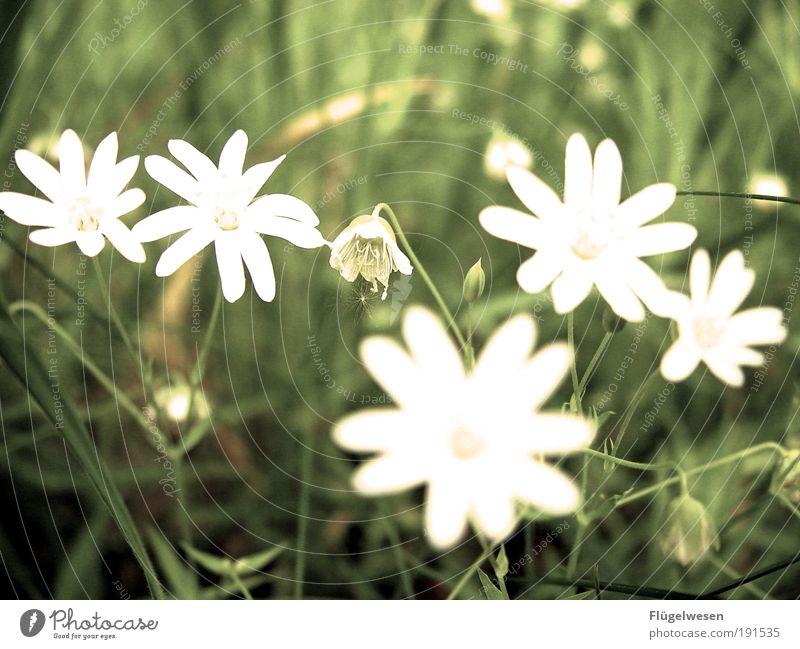 Die Sieliebtmichsieliebtmichnicht-Blume Natur Pflanze schön Erholung Umwelt Wiese Gras Lifestyle Paar Park Freizeit & Hobby Erfolg Warmherzigkeit Romantik