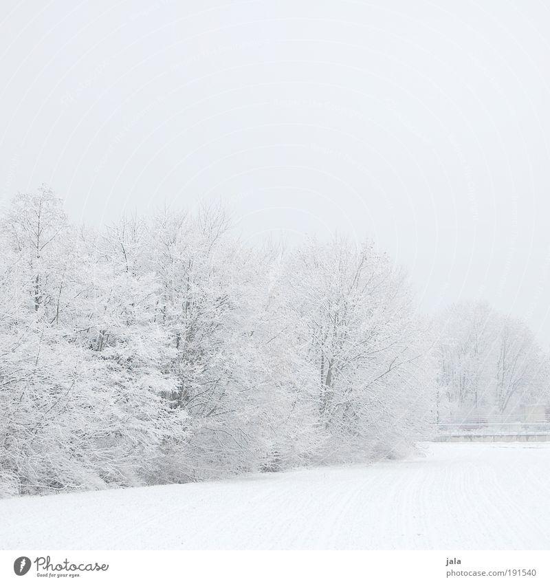 winter world Natur Landschaft Himmel Winter Schnee Baum Sträucher Park Feld kalt Gedeckte Farben Außenaufnahme Menschenleer Textfreiraum oben Textfreiraum unten