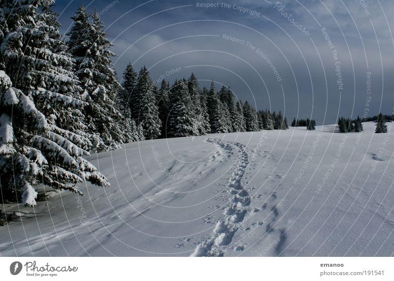 bergspuren Natur Baum Landschaft Winter Berge u. Gebirge Schnee Sport Freiheit Freizeit & Hobby wandern Ausflug Klima Schönes Wetter Abenteuer Gipfel Schneelandschaft