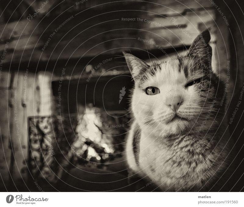 Hundekälte Kamin Feierabend Gebäude Brustbehaarung Tier Haustier Katze 1 Metall Trägheit Pause heizen Erholung Wärme brennen Schwarzweißfoto Innenaufnahme