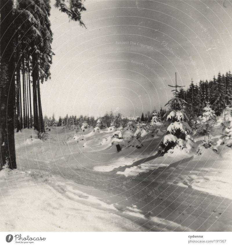 Wintertage Ferien & Urlaub & Reisen Winterurlaub wandern Umwelt Natur Landschaft Wetter Eis Frost Schnee Baum Wald Einsamkeit Freiheit geheimnisvoll Idylle