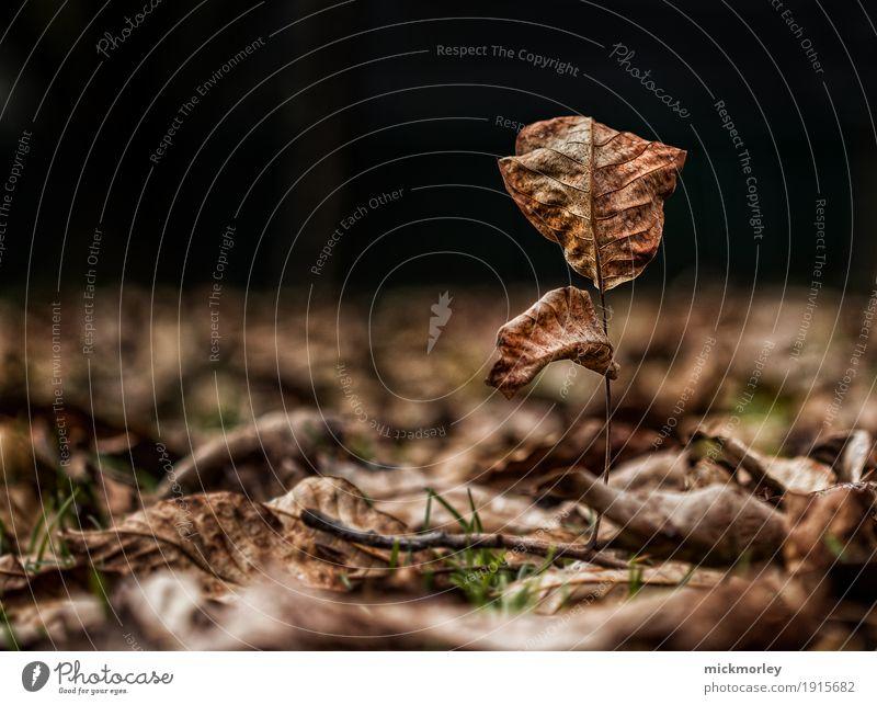 Alle bis auf einen Umwelt Natur Landschaft Pflanze Erde Herbst Klima Klimawandel Wetter Baum Blatt Garten Park Wiese Wald alt beobachten genießen verblüht