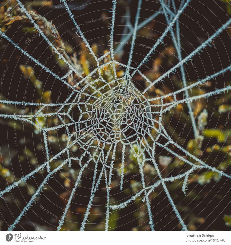 Eisige Spinnweben II Winter Natur Pflanze Herbst Traurigkeit kalt Sorge Trauer Einsamkeit Mittelpunkt Surrealismus Vergänglichkeit Frost Jahreszeiten gefroren