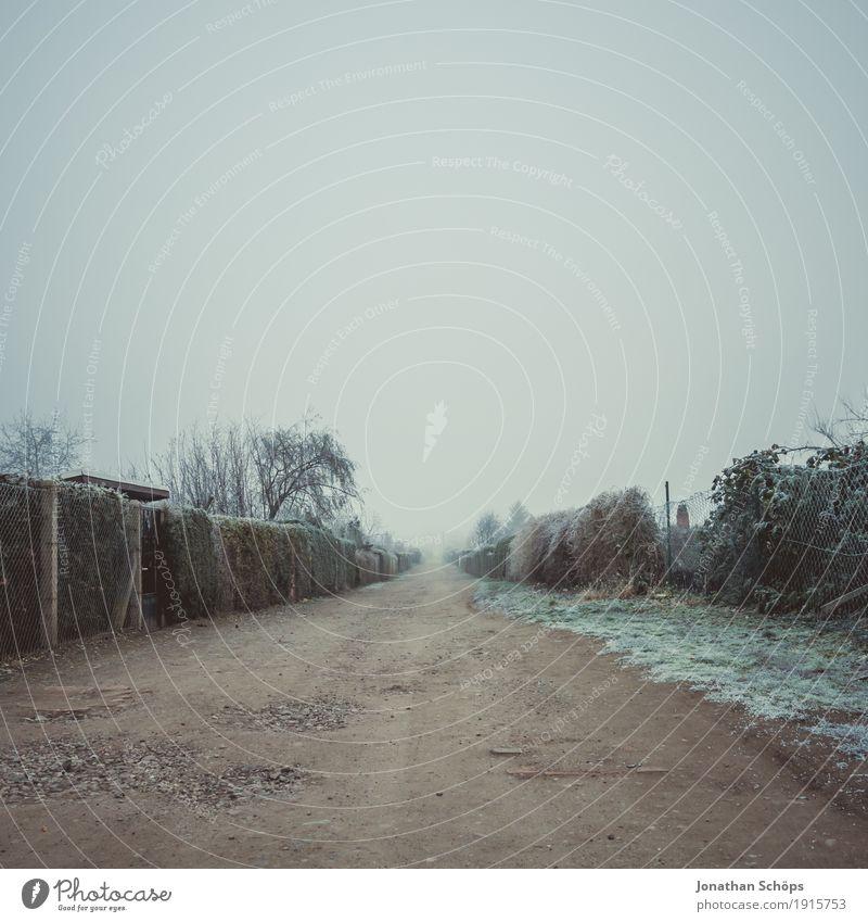 Väterchen Frost XVIII Winter Natur Pflanze Herbst Nebel Traurigkeit kalt Trauer Fernweh Einsamkeit Vergänglichkeit Jahreszeiten Wege & Pfade Ziel Mitte Eis