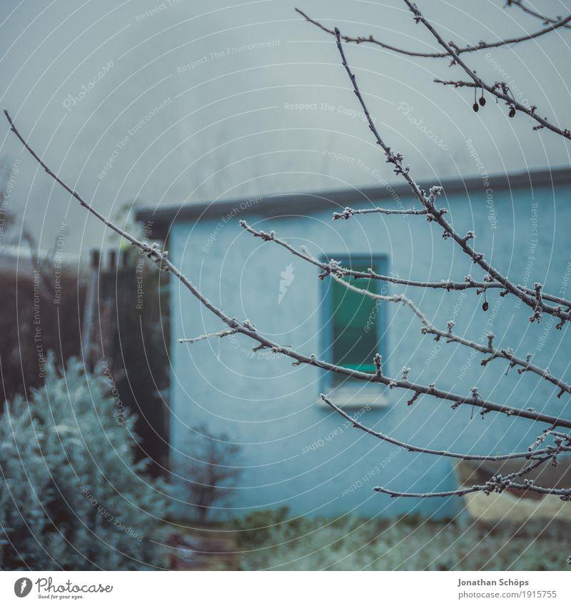 Väterchen Frost XIII Winter Natur Pflanze Herbst Nebel Traurigkeit kalt Trauer Sehnsucht Heimweh Einsamkeit Vergänglichkeit Jahreszeiten Eis gefroren blau